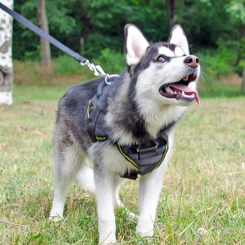 Arnés para cachorro husky siberiano «Fuerza de tracción» - H12