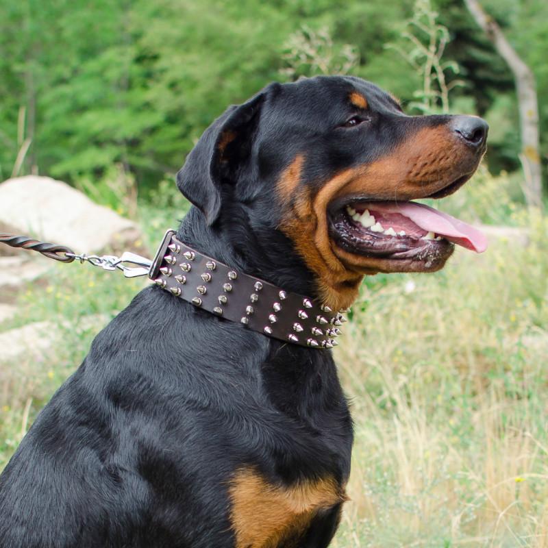 collares para perro rottweiler